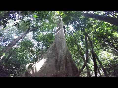 Peru | Amazon Tour | Canoe and Rain Forest Hike