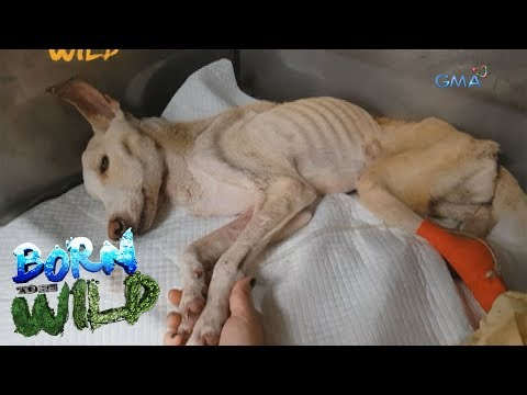Born to Be Wild: Doc Nielsen saves a dog who swallowed a bone