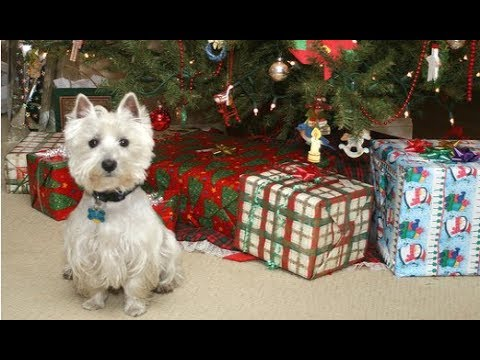 Funny Dogs Opening Their Christmas Presents