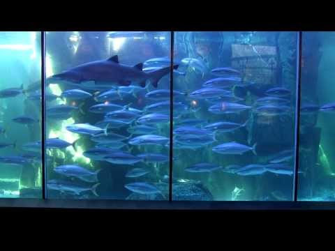 Two Oceans Aquarium [Cape Town Tourism]
