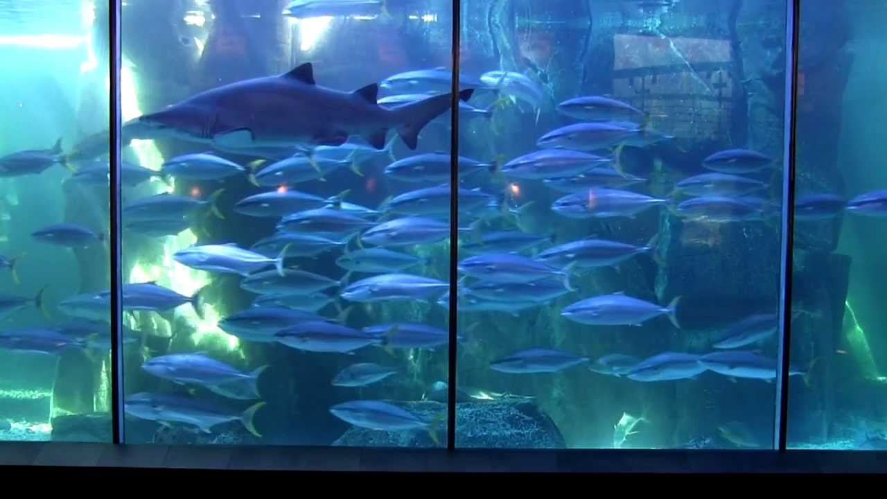 Freshwater aquarium fish cape town - Two Oceans Aquarium Cape Town Tourism