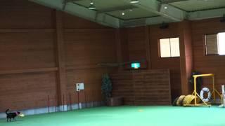 那須どうぶつ王国 ザ・ドッグ http://plaza.rakuten.co.jp/keptkun/diar...