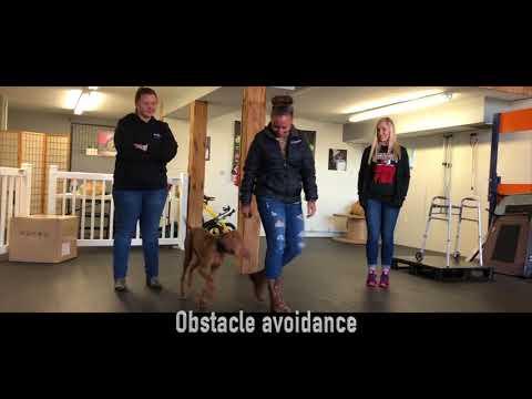 5-Month Old Vizsla, Brutus | Vizsla Dog Training | Off Leash Vizsla Dog Trainers