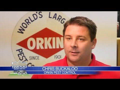 Your Place 01 - Orkin Pest Control