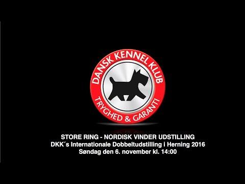 STORE RING - NORDISK VINDER UDSTILLING / DKK´s Internationale Dobbeltudstilling 2016