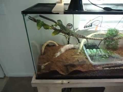 Terrarium Misting System For Cheap Youtube