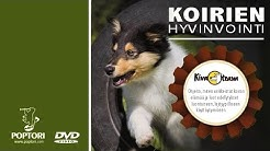Koirien Hyvinvointi  2. Virikkeistäminen - Apu ongelmakäyttäytymiseen ja stressiin