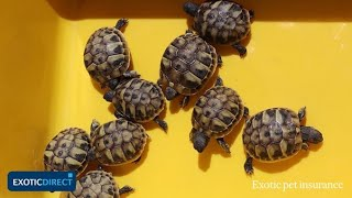 Download 4 popular pet tortoise breeds | Choose the best pet tortoise for you in this in-depth guide