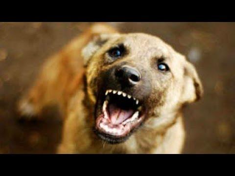 التخلص من نباح الكلاب الصغيرة الجراء عند دخولها بيتك لاول مرة Youtube