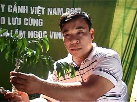 Video nghệ nhân Lâm Ngọc Vinh trình bày kỹ thuât tạo hình Bonsai phần 2