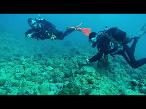 Mauritius Scuba Diving : Turtle Point near Pereybere Beach : 23 June 2016 from YouTube · Duration:  10 minutes 39 seconds