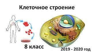 1 .Строение клеток человека (8 класс) - биология, подготовка к ЕГЭ и ОГЭ 2020