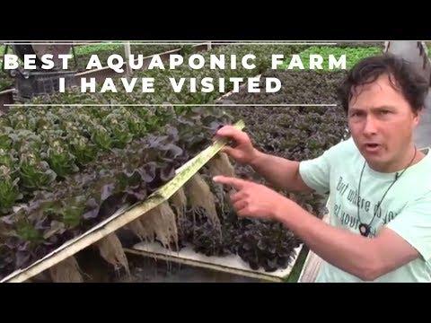Massive Aquaponics Farm Designs System to Reduce Waste & Increase Profits
