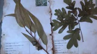 herbário