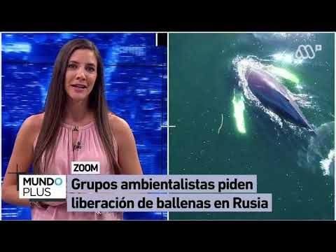 """Denuncian """"cárcel de ballenas"""" en Rusia"""