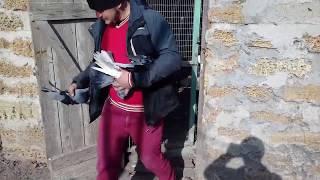 Николаевские голуби. Полет у Джона 2019