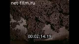 Производство белковой осетровой икры в СССР.