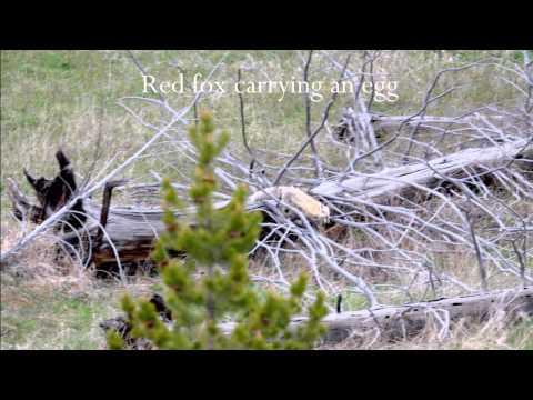 Yellowstone 2015 Adventure
