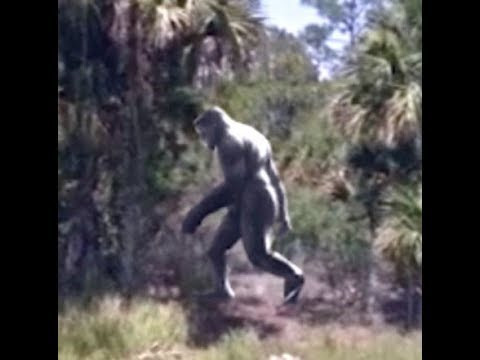 Bigfoot Spotted By Major Highway In Broad Daylight.  From The Files Of The BFRO.