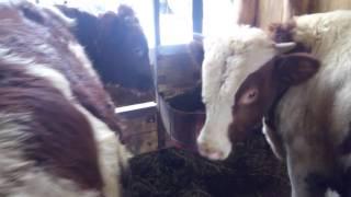 видео построить сарай для животных