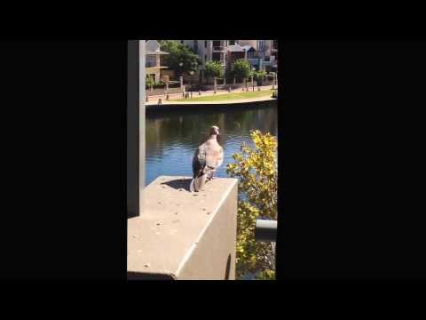 Sebel Residence Perth Australia
