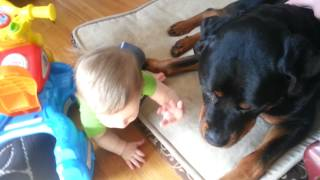 Dangerous Rottweiler Attacks Baby