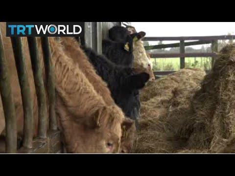 Irish Border: Farmers fear a 'hard' Brexit will hurt business