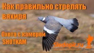 Как стрелять голубя вяхиря НОВЫЕ ВИДЕОПРИМЕРЫ