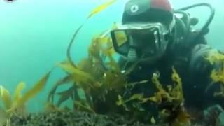 Морские водоросли Ламинария отзывы