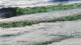 Radium water found in sea (Mangalore)