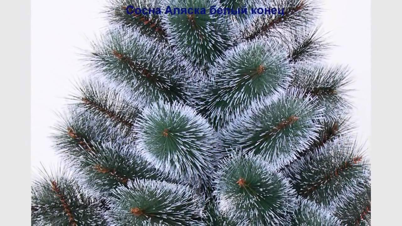 Новогодняя елка топиарий мастер класс - YouTube