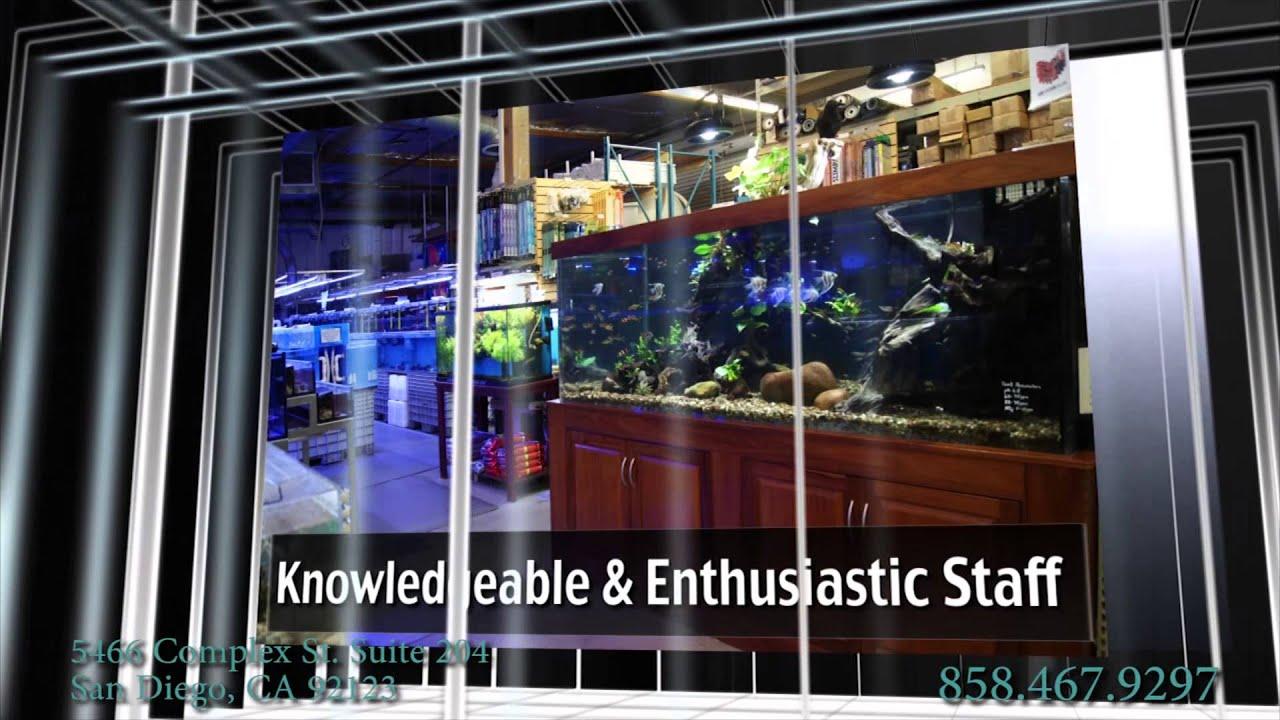 Freshwater Fish in San Diego | Aquatic Warehouse