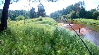 Рыбалка на реке Плюсса Ловим хариуса