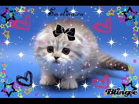 Текстом, живые блестящие картинки котята