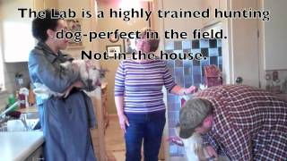 Chicago Dog Trainer: Training The Dog Pack