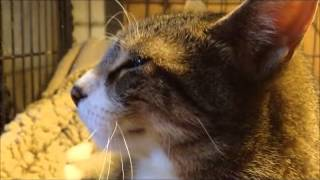 Cats And Dogs Do Not Need To Kill.........peter Caine Dog Training