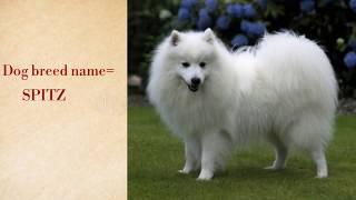Best✓✓ funny dog ✓✓in Kolkata [Lovely pom dog]