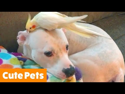 CUTE PETS! Funniest Animals of the Week | Funny Pet Videos
