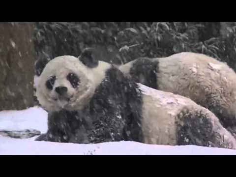 Видео про панду для детей