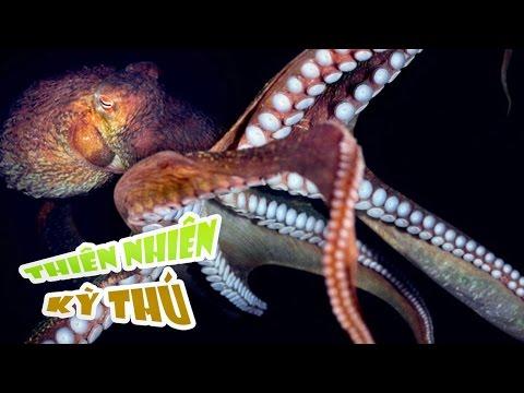 Những Kẻ Săn Mồi Dưới Đáy Biển - Undersea Predators