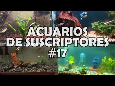 ACUARIOS DE SUSCRIPTORES #17 | Plantados,Goldfish, Tiburón Pangasio | AcuariosLP