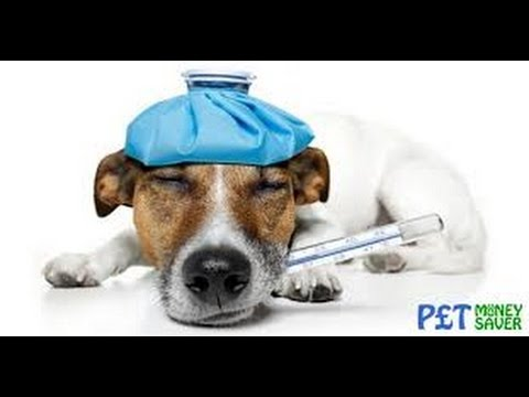 Pet Insurance for Pets at Home; Pets Insurance Quotes Compare Cheap Quotes+