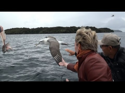 Silversea, Silver Shadow. Stewart Island. Bird Watching Cruise on Paterson Inlet