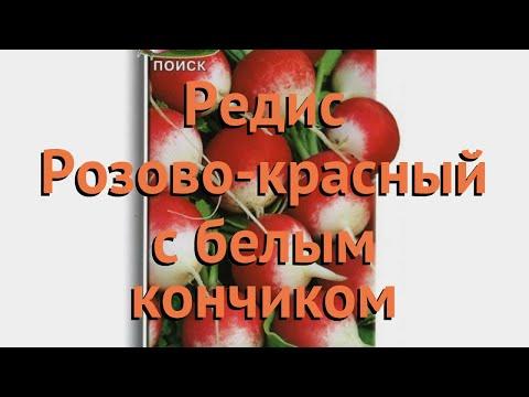 Редис обыкновенный Розово-красный с белым кончиком �� обзор: как сажать, семена редиса