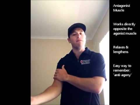 Lesson 4 Agonist & Antagonist Muscles