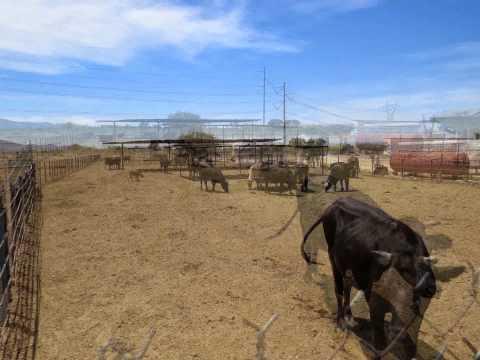 TRUE GENTLEMAN'S RANCH FOR SALE IN PHOENIX, ARIZONA