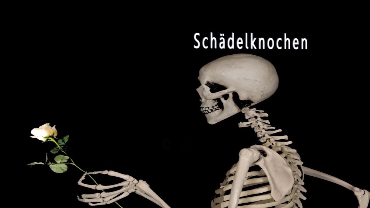 Skelettsystem 1 - Kurz-Zusammenfassung - Schädel - Bänder - Sehnen ...