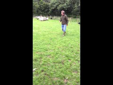 Scottish Shepherd Neil Ross with Border Collies