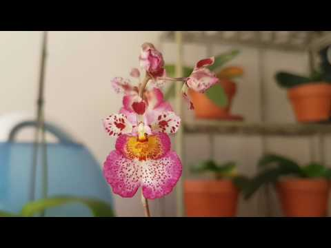 orchids in assam It is situated on the west bank of kameng river (also known as jia bharoli in assam) the house accommodates about 1000 exotic orchids displayed in pots.