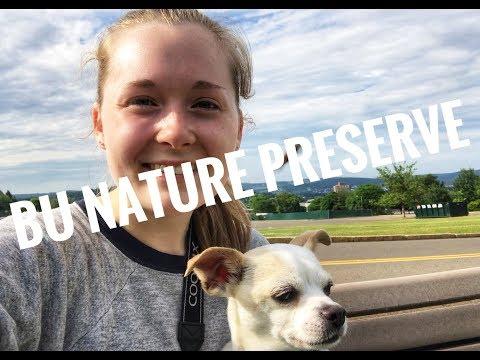 Local Hiking | Binghamton University Nature Preserve